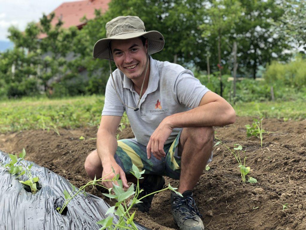 Kovács András - palánták ültetése