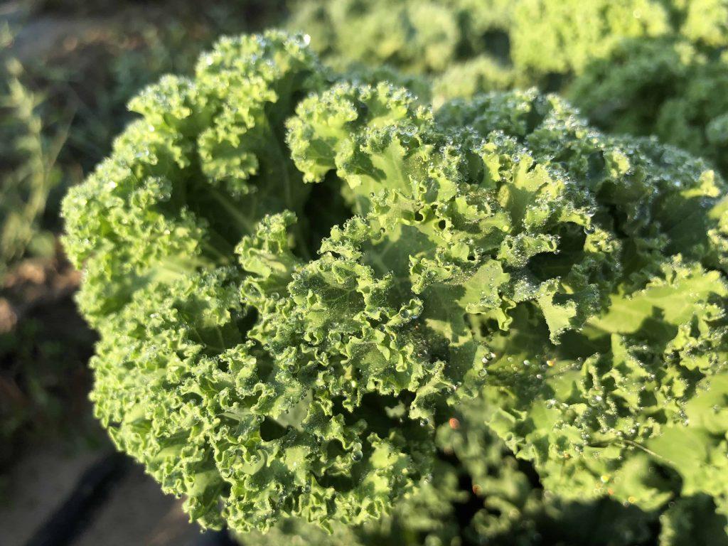 Hát nem szép az organikus fodros kel?