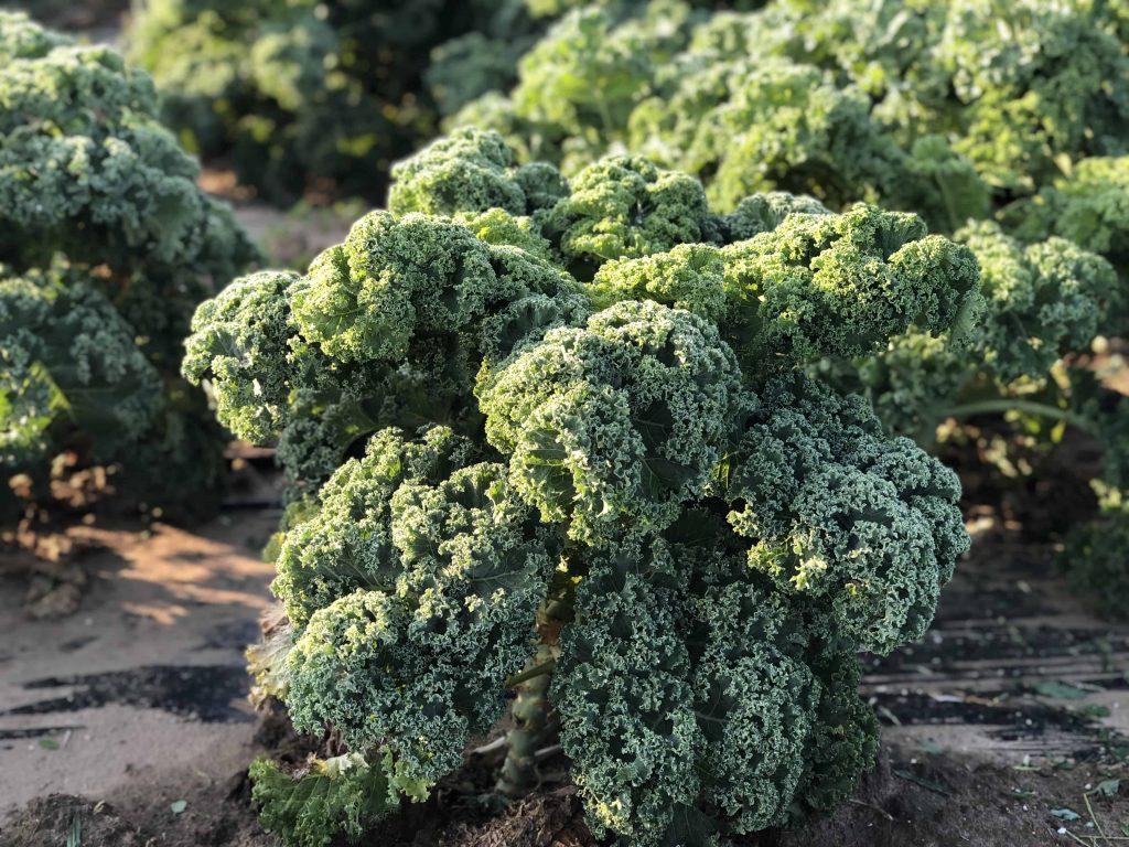 organikus fodros kel